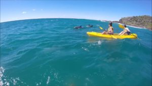 Dolphins, whales kayaking the best time of year